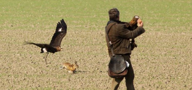O lovu s dravcem